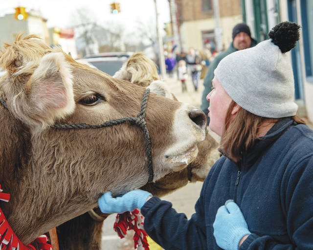 Angela Hill kisses a cow that's all dressed up for yuletide joy during Christmas in the Village festivities in Mechanicsburg on Saturday. The downtown festival is one of the largest annual events in the village each year.
