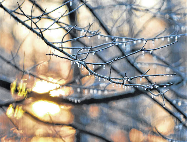 Tree branches are encased in frozen rain as the sun sets Sunday in this display of fire and ice.