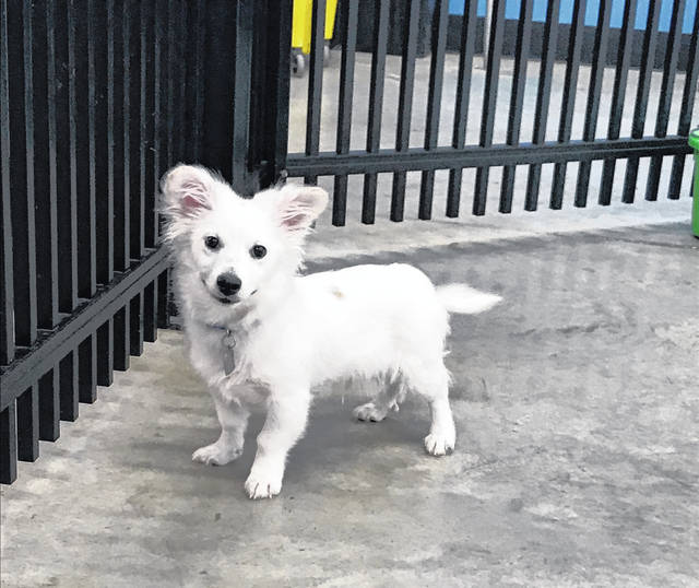 Cute little Bolt may be only 5 months old, but he knows a trick or two and is ready to ring your bell. Stevie Nicks could use an individual or family who will fuss over her and play with her. Visit her at PAWS Animal Shelter.