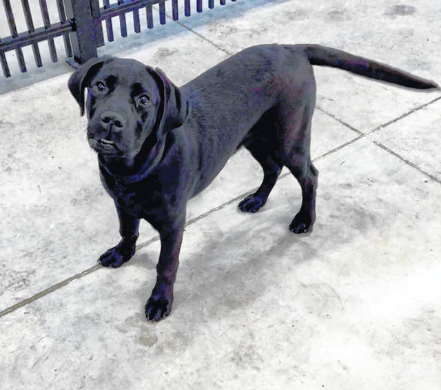 Cash is a 6-month-old pup weighing about 50 pounds. This energetic, friendly pooch is ready for adoption at the Champaign County Animal Welfare League.
