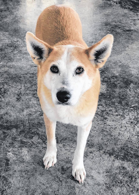 Daisy, a sweet 5-year-old Heeler Mix, is up for adoption at Barely Used Pets.