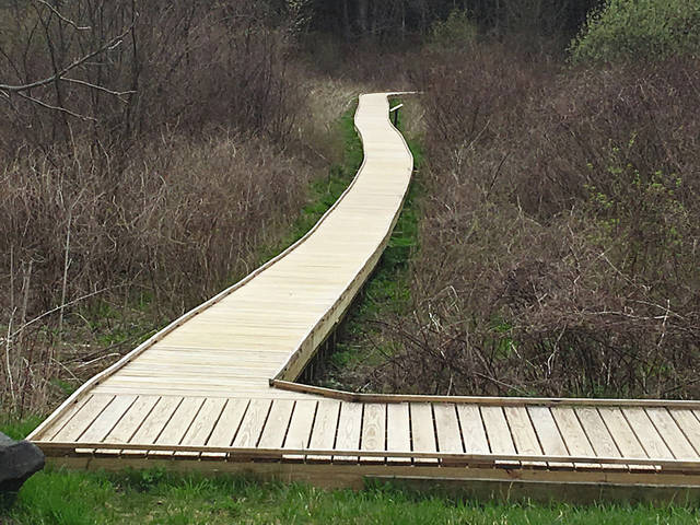 Take an adventurous spring wildflower walk on the 1.5-mile Cedar Bog boardwalk.
