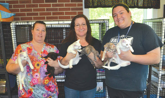 PAWS Animal Shelter employees Angie Elsass, Alice Stanford and Madi Vanscoy hold six of the kittens who will be available to pet this Saturday during the second annual Kitty Shower from noon to 3 p.m. at their adoption facility at 1535 W. U.S. Route 36. Guests are invited to bring a gift for the kittens and enjoy refreshments, games, and a raffle item; a wish list of items needed to maintain the shelter is available on the PAWS Urbana Facebook page. Additionally, May is National Pet Month and multiple businesses throughout the region will be participating in Paws for PAWS, a promotion in which customers get a paw with their name on it in exchange for a $1 donation to the animal shelter.