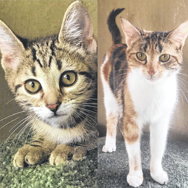 Tootsie and Teetsie are mother and daughter looking for new and separate homes. Pay them a call at the Champaign County Animal Welfare League.