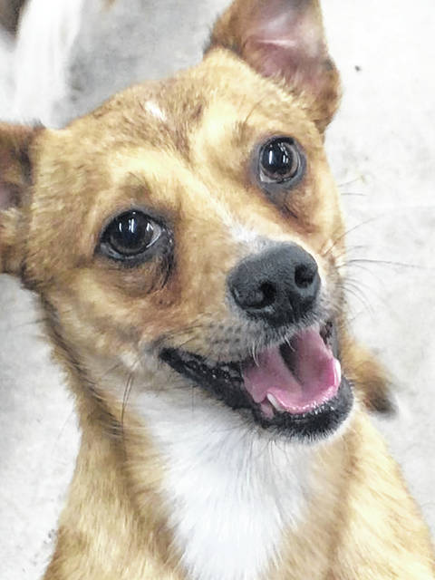 Rufus is a 2-year-old Jack Russell mix ready to spring into a new life - perhaps with you? Drop by and get acquainted at the Champaign County Animal Welfare League.