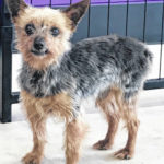 Pets of the Week