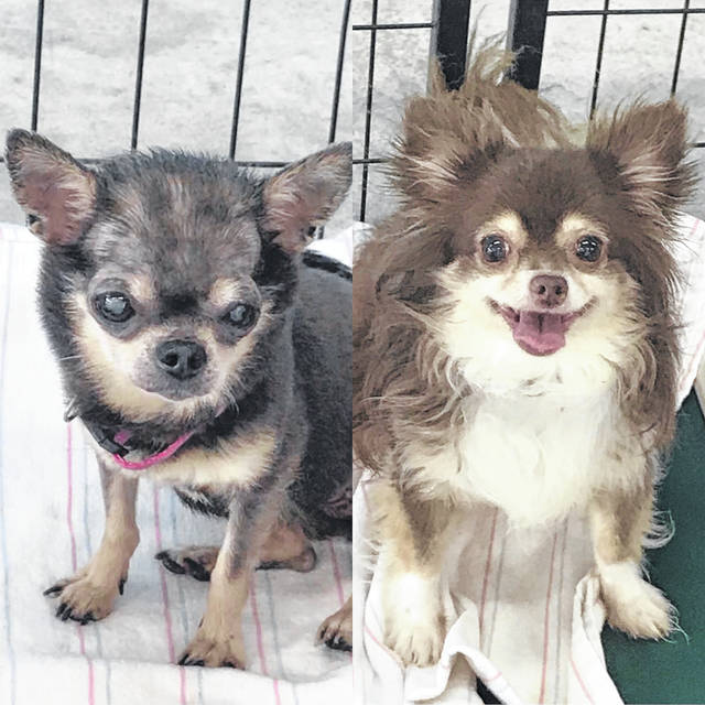 Siblings Half Pint and Bean are a bonded pair that need to be adopted together. Check out these buddies at the Champaign County Animal Welfare League.