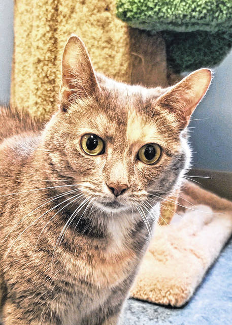 Faith, age 6, seeks a quiet home and comfy lap. Visit her at PAWS Animal Shelter.