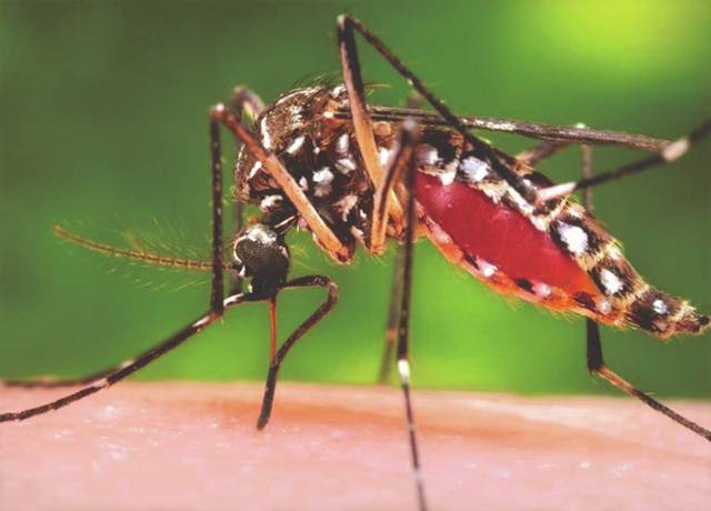 Keep disease-carrying mosquitoes away by disposing of scrap tires on Oct. 12.
