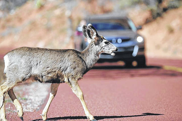 Deer-vehicle collisions are more likely October through December and 5-8 a.m. and 5-8 p.m., according to AAA Miami Valley.