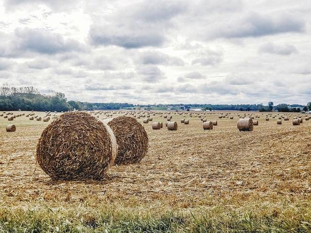 This photo by Serina Leistritz of Serina Ann Photography in downtown Urbana shows silage bundles of dried corn crop filling a field at the corner of state routes 814 and 296 in Champaign County on a chilly October day.