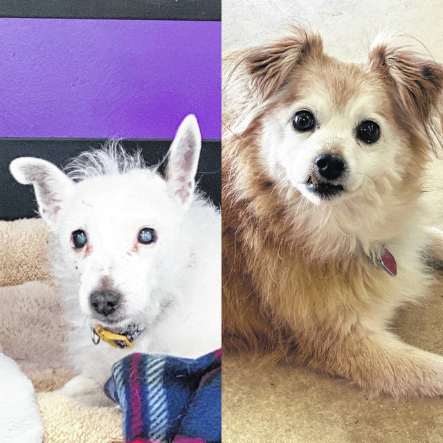 Cheyenne and Daisy are two of the seniors up for adoption during Adopt A Senior Month at the Champaign County Animal Welfare League.