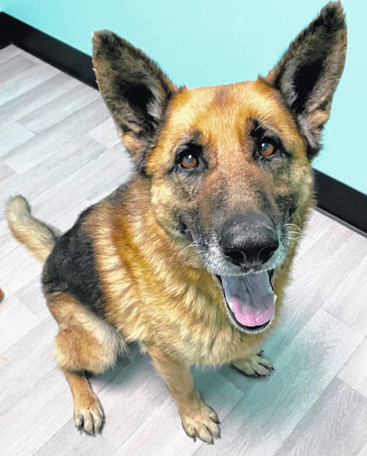 Shadow, age 7, wants a loving family or person to call his own. Visit him at Champaign County Animal Welfare League.