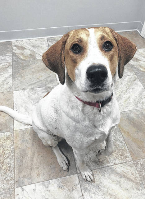 Katie is a sweet 2-year-old pooch up for adoption at Barely Used Pets.