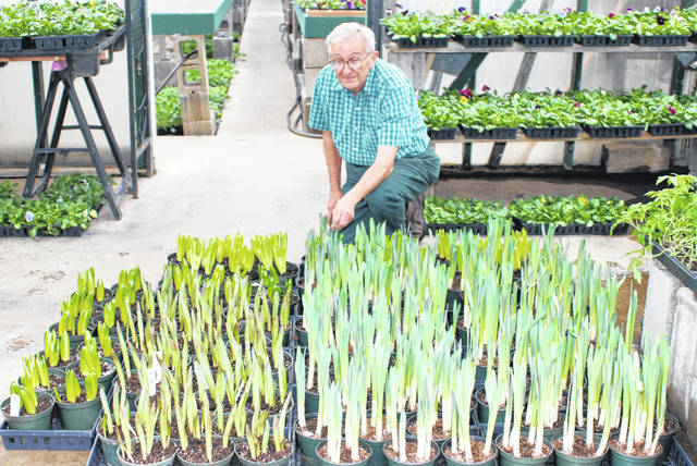 David Peirson poses with daffodils about to bloom at David's Greenhouses near Christiansburg. During this pandemic, one of the benefits of being rural is the ability to get outside with plenty of social distance and plant a garden to nourish the body and spirit.