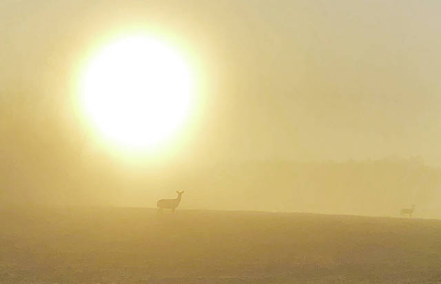 Deer are shown grazing in the haze at sunrise along Cemetery Road in northwest Champaign County. The photographer, Angie Spence, said she sees the deer there often. But the angle of the sunrise over their grazing area on Thursday morning was a sight to behold after several days of cold, gray weather.