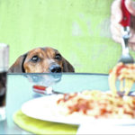 Not all foods fit for humans are fit for dogs