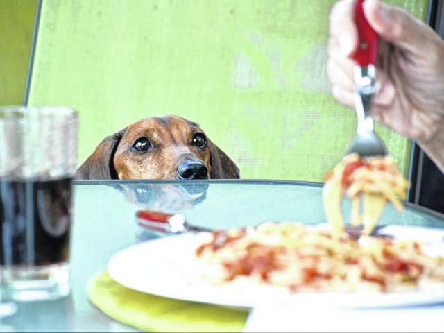 While your dog might look longingly at you while you eat, you might want to resist the temptation to share your goodies until you are sure that the foods you are eating won't have a negative impact on your pet.