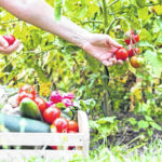 Yummy fruits and veggies now in season