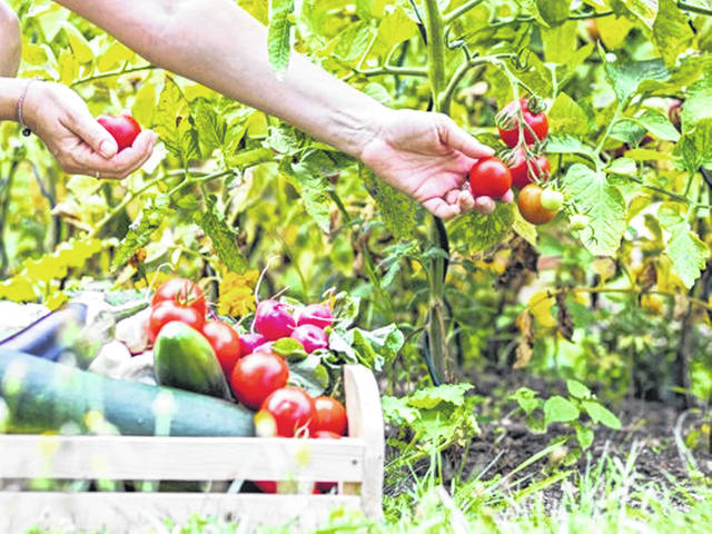 Agricultural innovations have allowed access to fresh fruits and vegetables year-round, but because fruits and vegetables naturally grow in cycles and ripen during a certain season, produce typically is fresher and tastes best when ripe.