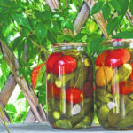Canning expected to be big this year