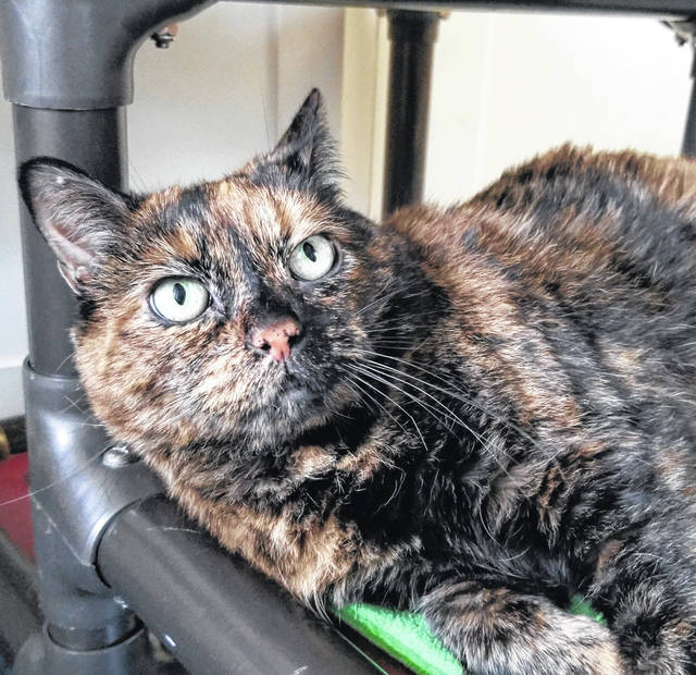 Molly, age 9, has lost her family and awaits a new one at PAWS Animal Shelter.