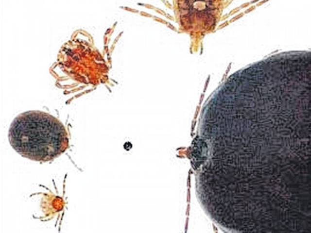 Nymphal and adult forms of the lone star tick are shown clockwise, from bottom left: unfed nymph, engorged nymph, adult male, unfed adult female, and engorged adult female. For size reference, the center dot is approximately 0.8 mm diameter.