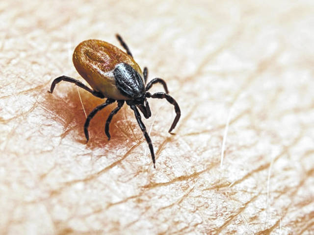 To avoid ticks when outdoors, wear long sleeves and pants. Tuck your pants into long socks.