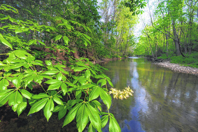 This photo by Randall Schieber shows part of the 90 acres Honda is donating to the Ohio Nature Conservancy to preserve and protect the environmentally unique headwaters of the Big Darby Creek watershed.