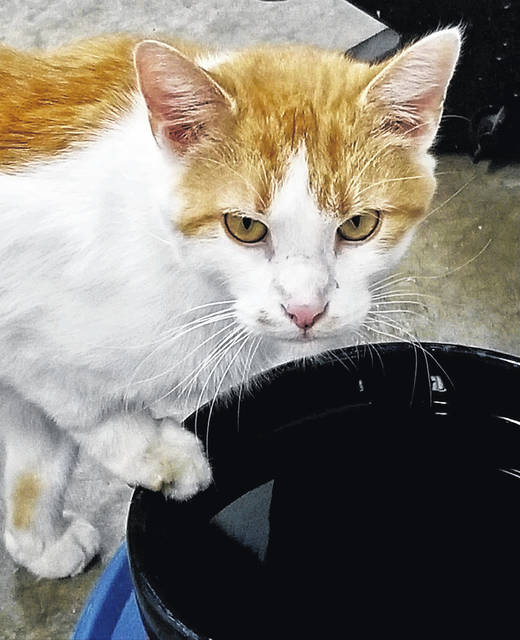 Tom, a sweet 5-year-old, is ready to be adopted at PAWS Animal Shelter.