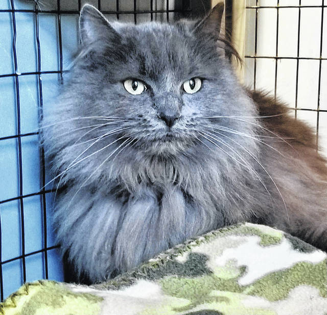 Winnie, about a year old, is ready for someone to adopt her from PAWS Animal Shelter.