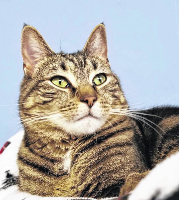 Mick is a 2-year-old cat seeking a home in which he is the only cat. Check him out at PAWS Animal Shelter.