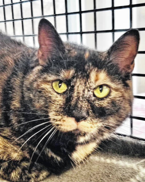Bathsheba, age 4, needs a new home since owners moved without her. Check her out at PAWS Animal Shelter.