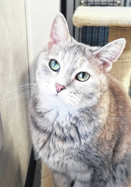 Tootsie, age 5, is waiting for someone to adopt her at PAWS Animal Shelter.
