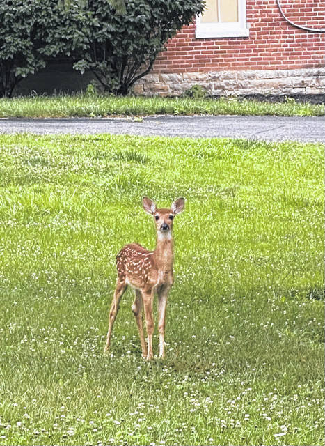 Christina Vactor captured this photo of a fawn at the former Urbana University branch campus. The campus hosted the Charg1ng Heisman Elite Football Camp last weekend, injecting new life and hope into a large portion of southwest Urbana that has been inactive and vacant since spring of 2020 when the pandemic forced Franklin University to shutter the campus permanently. The campus is currently for sale and is being considered by Miller and his investors for rebirth as a preparatory school featuring athletics.
