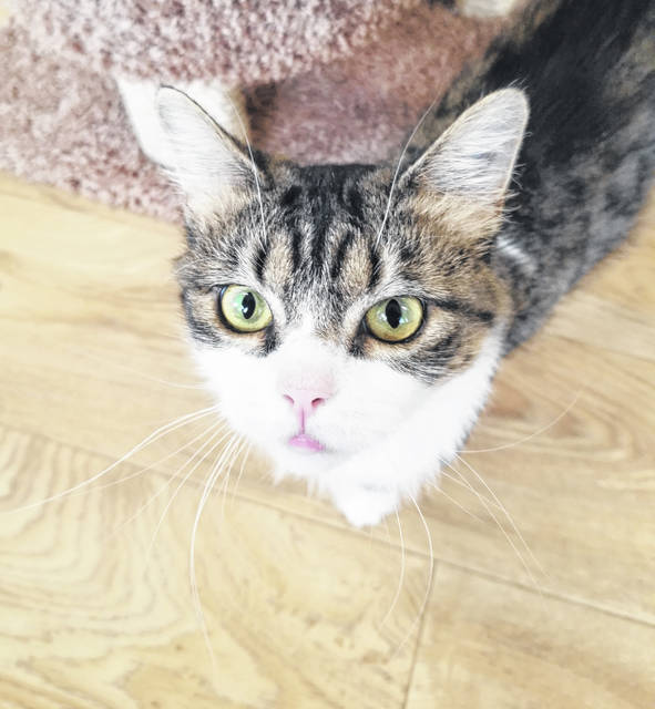 Belinda is a 3-year-old spayed female.
