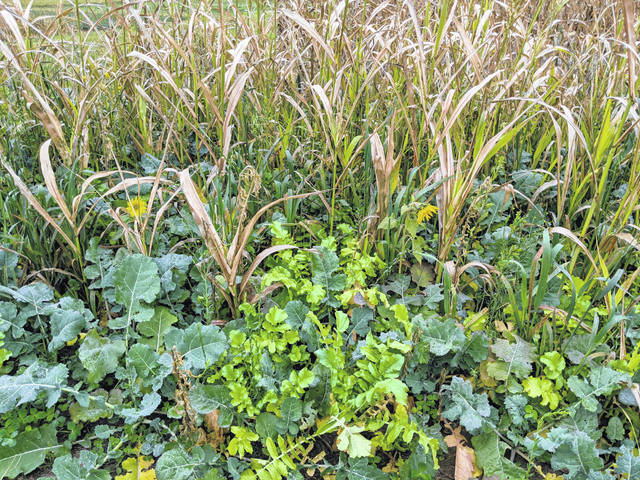 Ohio No-Till Council is hosting an afternoon event focused on precision agriculture, manure, cover crops and using them as forages.
