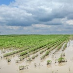 UPDATED: Wet weather threatens northern Ohio soybeans
