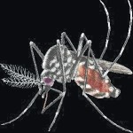 West Nile virus confirmed in Richland County