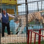 Day 3 fair highlight: Tiger time