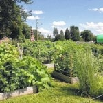 Church garden reaches out to community