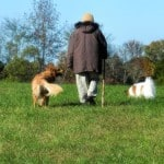 Fall prevention in Ohio: One step at a time