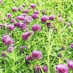 Award-winning cover crops guide helps growers improve water quality