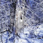 How does winter affect Ohio wildlife?