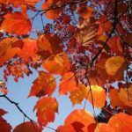Take a fall vacation on one of Ohio's Adventure Trails