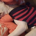 Tips to take care of your pets in cold weather