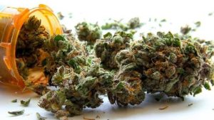 Quick poll: Medical marijuana OK, but not all are ready to legalize pot for recreational use