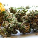 What are your thoughts on medical marijuana; possible legalization of recreational marijuana?