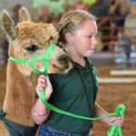Gallery: Crawford County Fair, Alpaca Show and more: Photos by Don Tudor