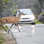 Be alert behind the wheel; Deer-vehicle collisions reach their peak in November
